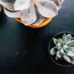 We need Different things to Survive and Thrive – a Perspective from a Succulent